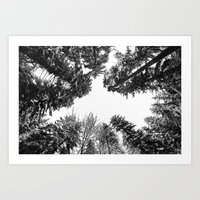 snow + trees Art Print