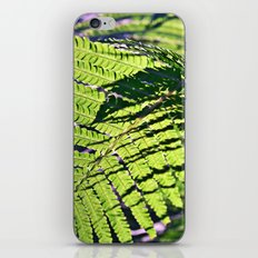 Summer Fern in Sunny Dreams iPhone & iPod Skin