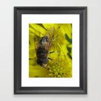 Wellow Wasp Framed Art Print