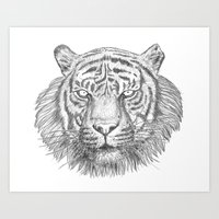 The Tiger's head Art Print