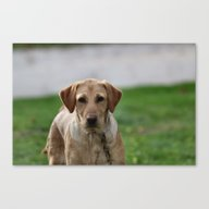 Are You Gonna Play? Canvas Print