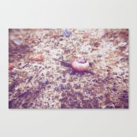 Escargot Canvas Print