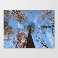 Pine Tree II Canvas Print