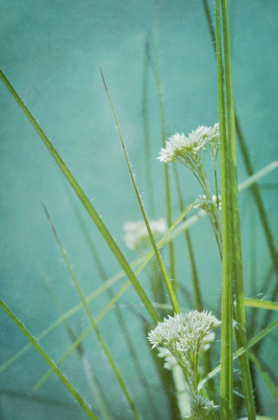 summer grasses Art Print
