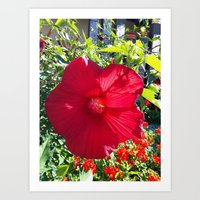 Delicate Red Art Print