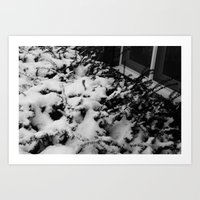Black and white Snowed Bushes Art Print