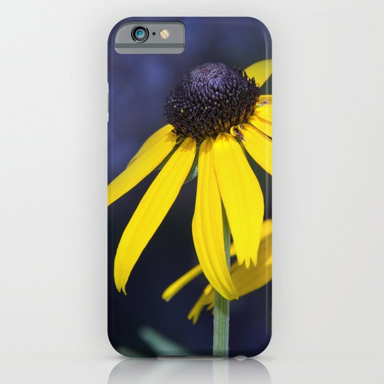 Black-eyed Susan iPhone & iPod Case