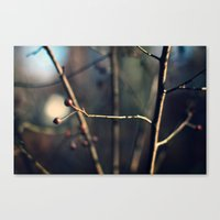 Winter Waits Canvas Print