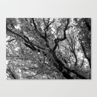 Under the Elm Canvas Print