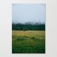 Morning Graze Canvas Print