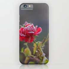 Rose in the frost iPhone 6 Slim Case