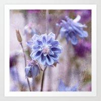 Columbines Blue Art Print