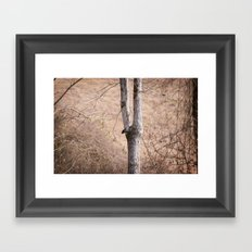 January Trees Framed Art Print