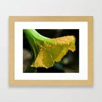 Yellow Morning Glory Framed Art Print
