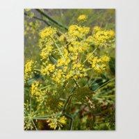 Yellow Spray Canvas Print