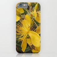 Beautiful St Johns Wort iPhone 6 Slim Case