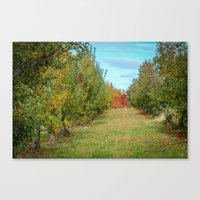 Branstool Orchards Canvas Print