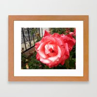Rainy Day Rose Framed Art Print