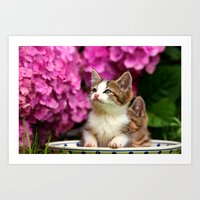 Kittens in bowl Art Print