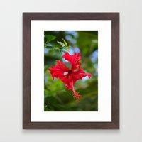 Scarlet Flower Framed Art Print
