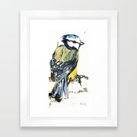 Mr Blue Tit Framed Art Print