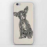Polynesian Chihuahua iPhone & iPod Skin