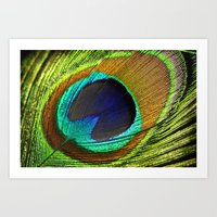 feathers Art Prints featuring feathers by mark ashkenazi