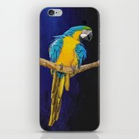 Blue And Yellow Macaw iPhone & iPod Skin