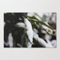 Sage In Winter Canvas Print