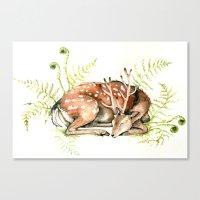 Sleeping Deer Canvas Print