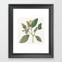 Impatiens Capensis Framed Art Print