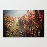 Autumn grapes vine Canvas Print