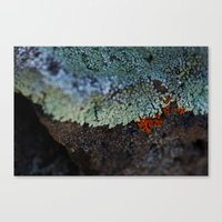 Lichen Ice Canvas Print