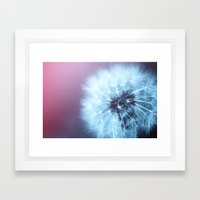 Dandelion Flower Framed Art Print