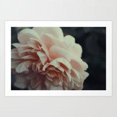 Wildeve Rose No. 2 Art Print