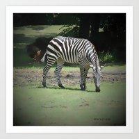 zebra Art Prints featuring Zebra by BeachStudio