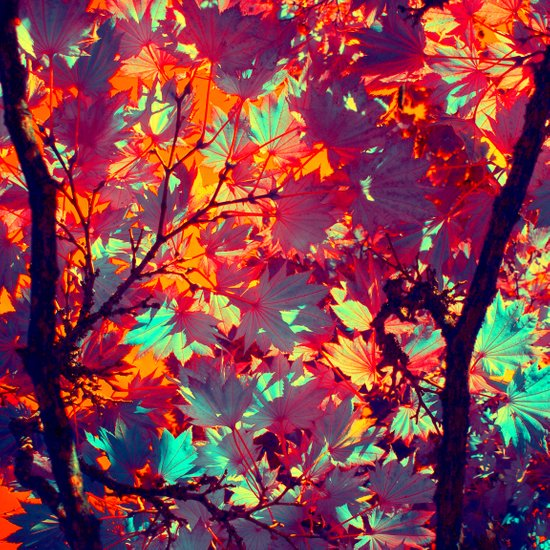 autumn tree X Art Print