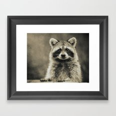 RACCOON PORTRAIT Framed Art Print