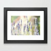 Lavanda. Framed Art Print