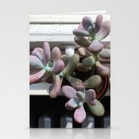 Succulent In Sunlight Stationery Cards