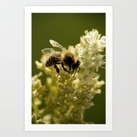 Macro Bee Art Print
