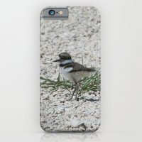 Baby Killdeer iPhone 6 Slim Case