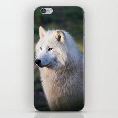 Canis Lupus Arctos II iPhone & iPod Skin
