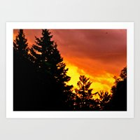 Sunset Pines Art Print