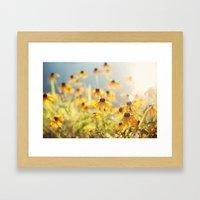 Summer Susans Framed Art Print