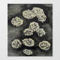 Flowers - lithography Canvas Print