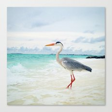 Love2Snap Instagram pic Bird Maldives Canvas Print