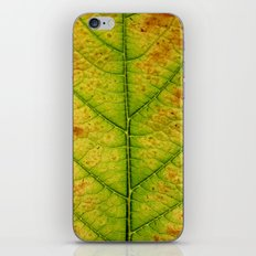 autumn leaf macro iPhone & iPod Skin