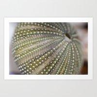 Urchin Texture Art Print