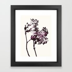 sugar maple 1 Framed Art Print